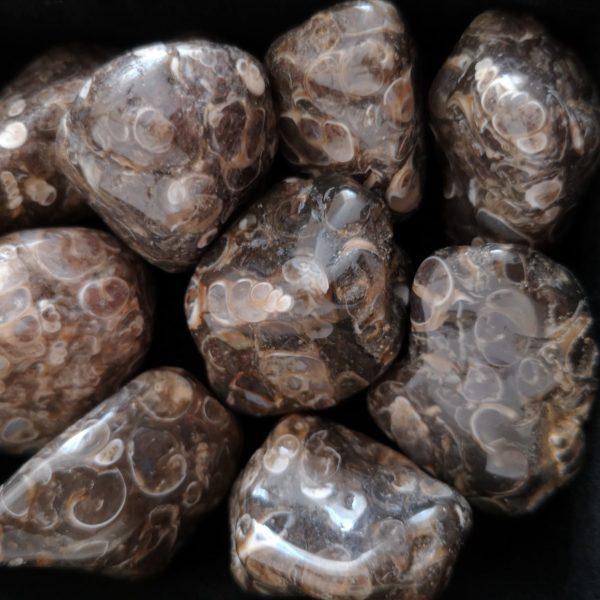 agate fossile agapanthe
