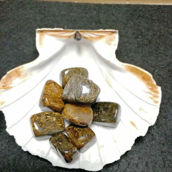 bronzite agapanthe